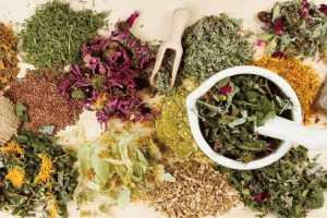 Лекарственные травы и отвары при гастрите желудка