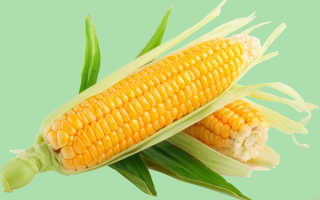 Разрешено ли употреблять кукурузу при гастрите