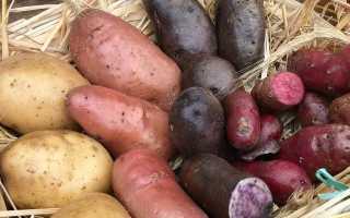 Использование картофеля в народной медицине