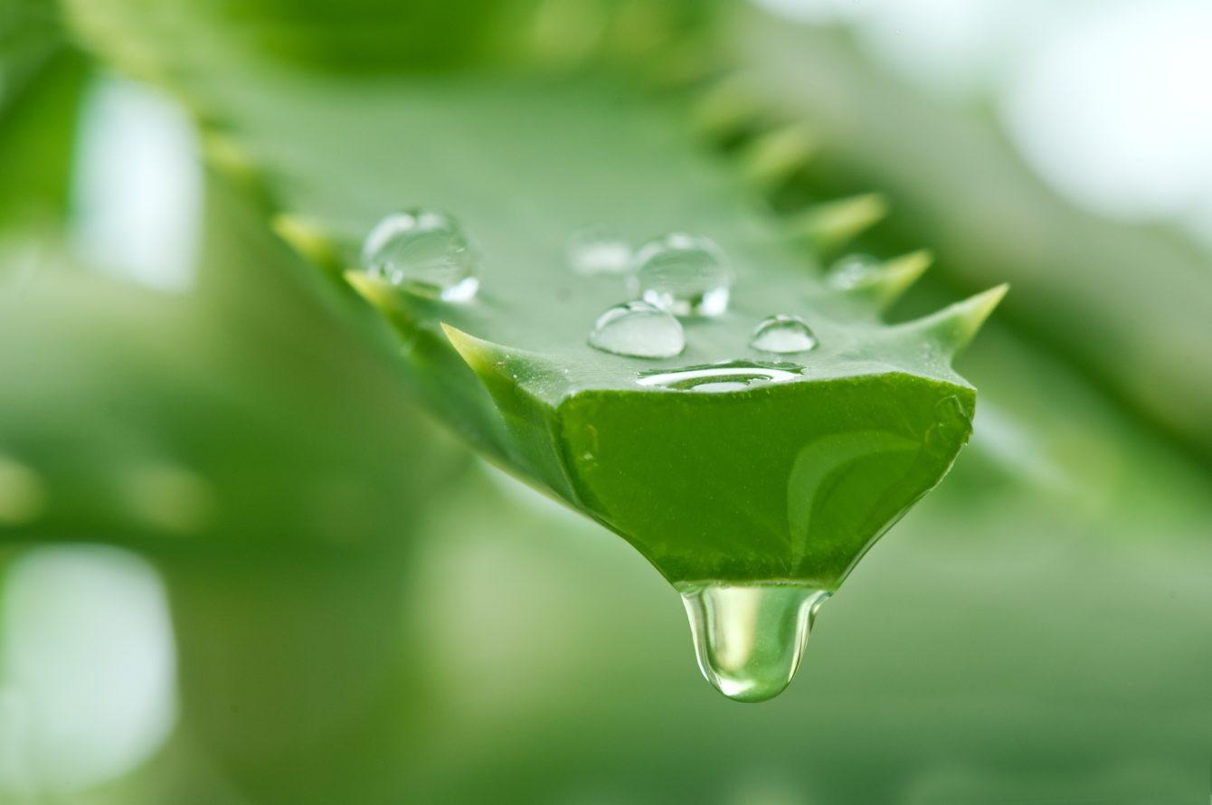 Применение алоэ при гастрите с повышенной кислотностью