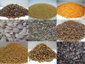 Семечки лекарственных растений