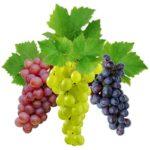 Виноград сладких сортов