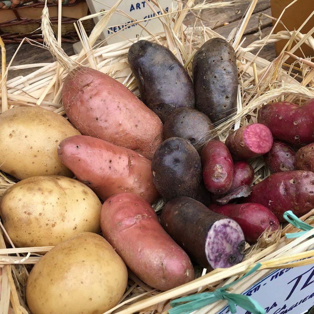 картофель семейство пасленовых